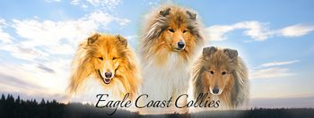 Hodowla Eagle Coast Collies